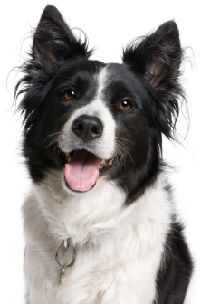 How Long Can You Maintain Vaccinations For Dogs